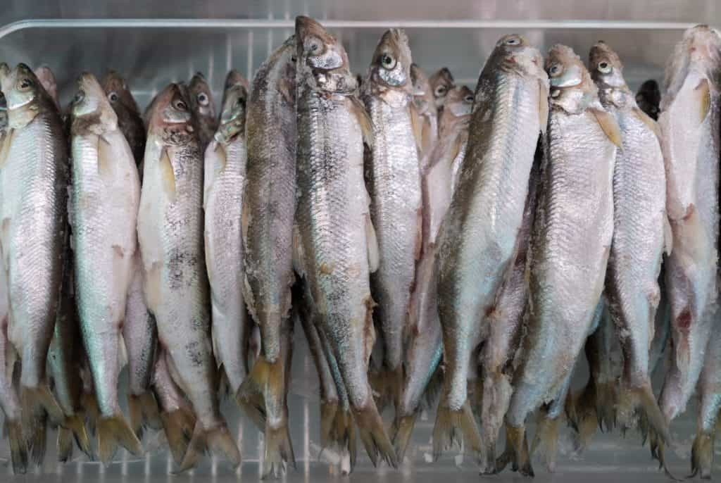 Top 6 Tips to Consider in Cooking Various Types Of Fish